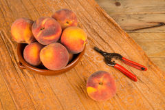 Peach harvest still life Stock Images
