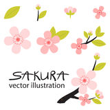 Peach or сherry blossoms icons set Stock Photography
