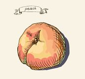 Peach  illustration Stock Photos