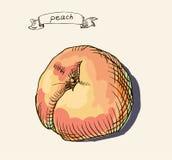 Peach  illustration Stock Photos