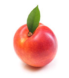 Peach isolated royalty free stock photos