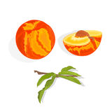 Peach with leaf, slice and half with bone vector Royalty Free Stock Photography