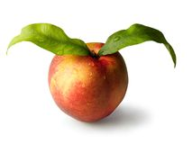 Peach with leaves Stock Photography
