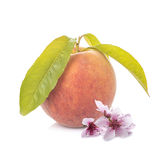 Peach with leaves and flowers isolated on white Royalty Free Stock Images