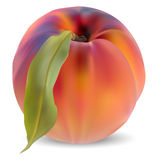 Peach and leaves Stock Images