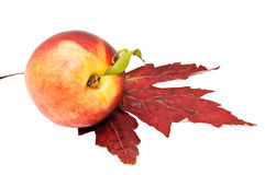 Peach and maple leaf. Royalty Free Stock Photos