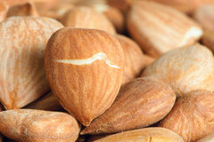 Peach nutlets Stock Images