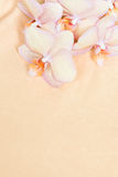 Peach orange orchid on the peach fabric, vertical flower background Royalty Free Stock Photography