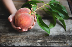 Peach Orchard  3. A Series of images of peaches in an orchard and on a back drop Stock Photo