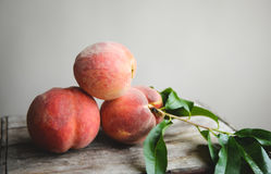 Peach Orchard  29. A Series of images of peaches in an orchard and on a back drop Stock Photography