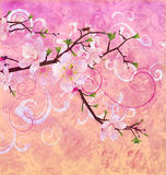 Peach pink colors blooming cherry tree Stock Photography