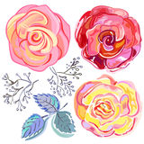 Peach pink red roses set Royalty Free Stock Photos