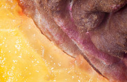 Peach pit macro Royalty Free Stock Images