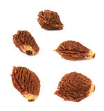 Peach pit seed isolated Royalty Free Stock Photos