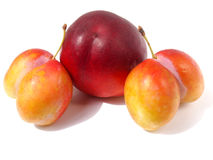 Peach with  plums. Peach with two unusual plums Stock Images