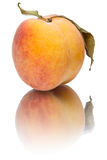 Peach with reflection Royalty Free Stock Images