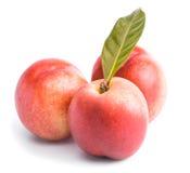 peach ripe Στοκ Εικόνα