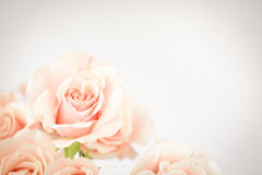 Peach rose cluster  with vignette Royalty Free Stock Photos