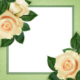 Peach rose flowers Stock Photography