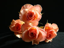 Peach Roses. A bunch of Peach Roses Stock Image
