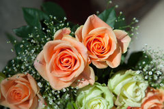Peach Roses Royalty Free Stock Photos