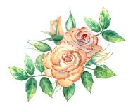 Free Peach Roses, Green Leaves, Open And Closed Flowers. A Bouquet Of Flowers For Greeting Cards Or Invitations. Watercolor Stock Photos - 184424273