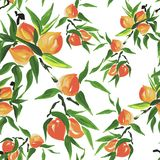 Peach seamless pattern Stock Photography