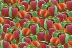 Peach Seamless Pattern royalty free stock photo