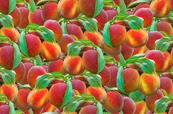 Peach Seamless Pattern Royalty Free Stock Images