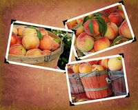 Free Peach Season Stock Photo - 15799160