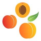 Peach. Set. Vector illustration (EPS 10 vector illustration
