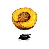 Peach slice vector drawing. Isolated hand drawn object on white Royalty Free Stock Images
