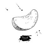 Peach slice vector drawing. Isolated hand drawn object on white Royalty Free Stock Image