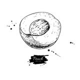 Peach slice vector drawing. Isolated hand drawn object on white Stock Photos