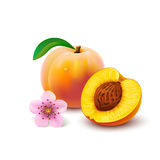 Peach with slice on white background Royalty Free Stock Photo