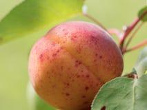 Peach with spots macro shot Stock Photo
