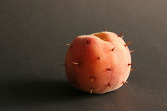 Peach with thorns. Peach with thorns on a black bacground Royalty Free Stock Photo