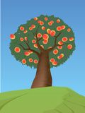Peach tree. Fruit-laden peach tree on green hill against blue sky Royalty Free Illustration