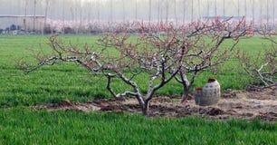 Spring field Stock Image