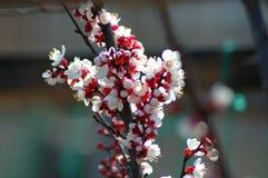 Peach tree flower in spring. stock illustration