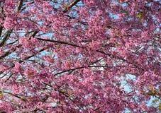 Peach tree and flowers Stock Photos