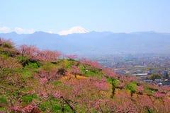 Peach tree and Mt. Fuji Stock Photos