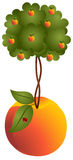 Peach tree in a peach Royalty Free Stock Images