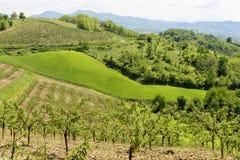 Peach trees near Casasco, Italy Royalty Free Stock Photos