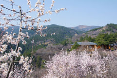 Peach Valley. The spring landscape of Peach Valley in Taiyuan, Shanxi, China Royalty Free Stock Photography