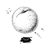 Peach vector drawing. Isolated hand drawn object on white backgr Royalty Free Stock Images