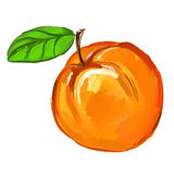 Peach Vector illustration of ink hand drawn Royalty Free Stock Photo