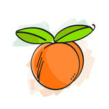 Peach vector illustration Stock Photography