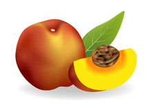 Peach. Vector illustration . Peach on white background Stock Photos