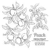 Peach vector set. Peach branches vector set on white background Royalty Free Stock Photo